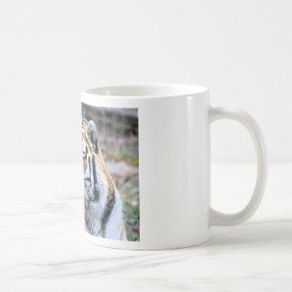 Mietstoic-königlicher bengalischer Tiger Kaffeetasse