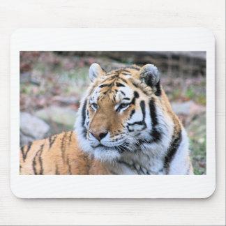 Mietstoic-königlicher bengalischer Tiger Mauspads