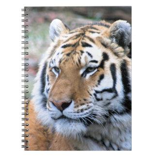 Mietstoic-königlicher bengalischer Tiger Spiral Notizblock