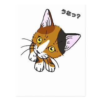 Miezekatze-Katze, Schildpatt (三毛猫) Postkarte