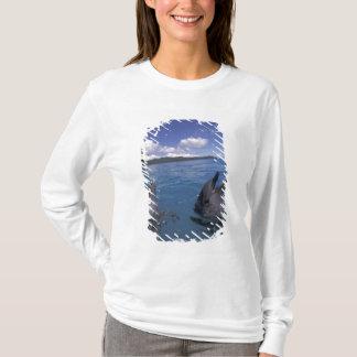 Mikronesien, Palau Bottlenosedelphine T-Shirt