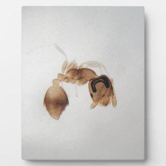 Mikroskop-Foto einer Ameise Fotoplatte