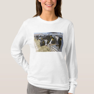 Milchkühe an einer Futterration in Grandview, T-Shirt