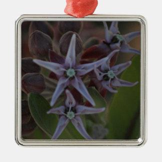 Milkweed-Blüte Silbernes Ornament