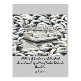 Millionen Sardinen 3-8-2011_ Postkarte