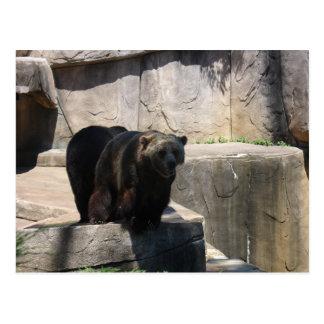 Milwaukee-Zoobär Postkarte