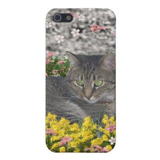Mimose die Tiger-Katze in den Mimosen-Blumen iPhone 5 Etui