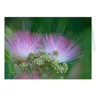 Mimose in der Blüte Karte
