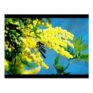 Mimose von Frankreich Postkarte