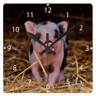Minischwein Quadratische Wanduhr