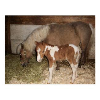 Miniture Pony und Baby Postkarte