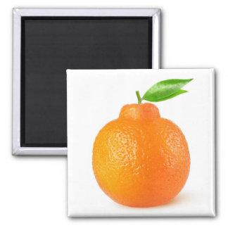 Minneola Tangelo-Zitrusfrucht Quadratischer Magnet