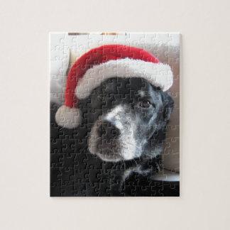 Mischung Sankt Hund-Labrador Rottweiler Puzzle