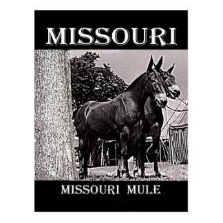 Missouri-Maultier Postkarte