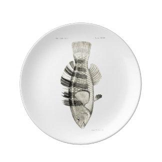 Mit einem Band versehene Papageien-Fische Teller