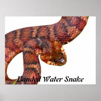 Mit einem Band versehene Wasser-Schlange Poster