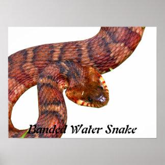 Mit einem Band versehene Wasser-Schlange Plakate