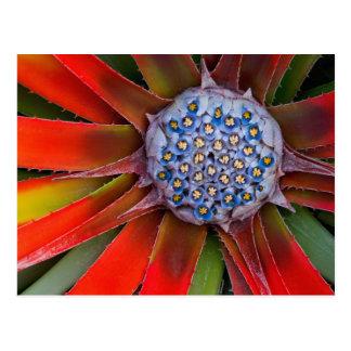 Mitte einer blühenden Agave - San Francisco Postkarte
