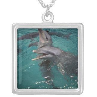 Mittelamerika, Panama. Flasche roch Delphine Versilberte Kette
