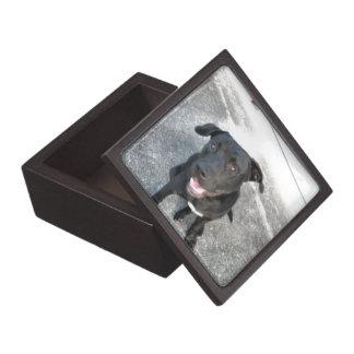 Mitternacht das schwarze Labrador-Lächeln Schachtel