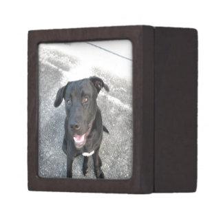 Mitternacht das schwarze Labrador-Lächeln Schmuckkiste