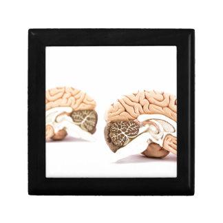 Modell der menschlichen Gehirne abgeschieden auf Geschenkbox