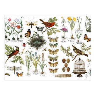 moderne Vintage französische botanische Vögel und Postkarte