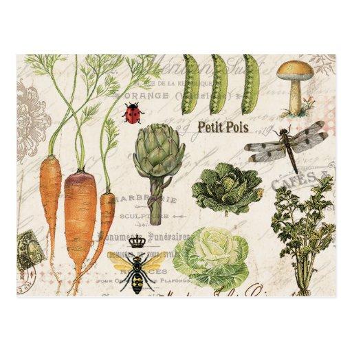 moderner Vintager französischer Gemüsegarten Postkarte