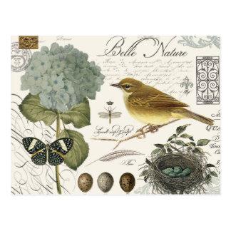 moderner Vintager französischer Vogel und Nest Postkarte