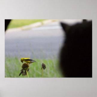 Mögliches Mittagessen - Katze und Vogel Poster