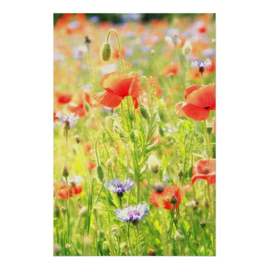 Mohn Traum Poster