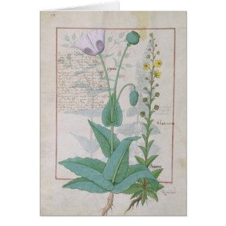 Mohnblume und Figwort Karte