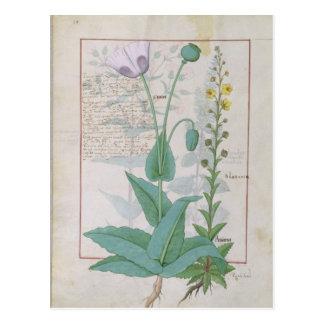 Mohnblume und Figwort Postkarte