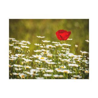 Mohnblume und Gänseblümchen Leinwanddruck