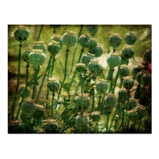 Mohnblumen-Blumen-Samen-Hülsen Postkarten