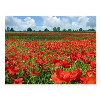 Mohnblumen-Felder Postkarten