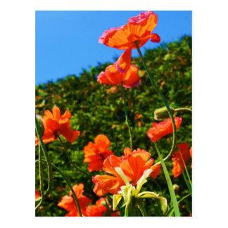 Mohnblumen-Foto Postkarte