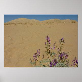 Mojave-Indigo Bush und Kelso-Dünen Poster