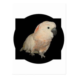 Moluccan Cockatoo-Papageien-Entwurf Postkarte