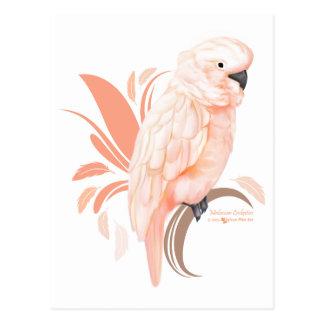 Moluccan Cockatoo Postkarte