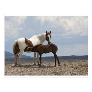 Momma und Baby-Mustang Postkarte