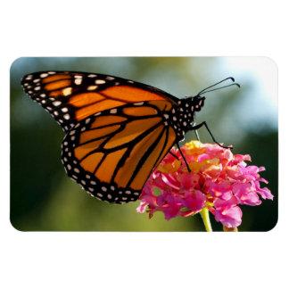 Monarch auf Blumen-Fotomagneten Magnet
