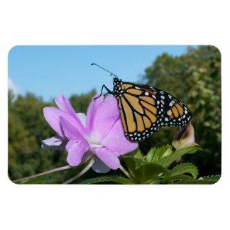 Monarch auf lila Blumenmagneten Magnet