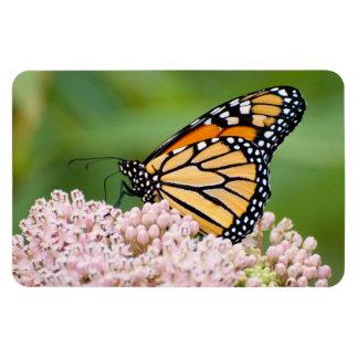 Monarch auf Milkweed-Blumen-Fotomagneten Magnet