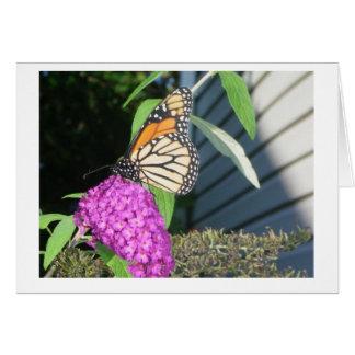 Monarch auf Schmetterlingsbusch Karte