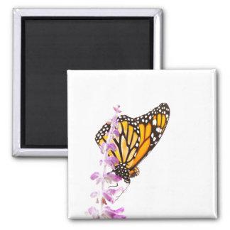Monarch gehockt auf Lavendel Quadratischer Magnet