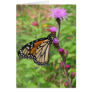 Monarch/Liatris Karte
