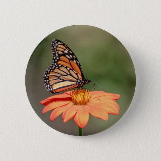 Monarch-Schmetterling auf einer orange Blume Runder Button 5,7 Cm