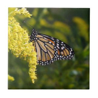 Monarch-Schmetterling auf Keramikfliese