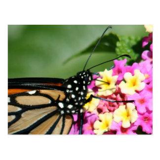 Monarch-Schmetterling auf Lantana-Blumen-Postkarte Postkarte